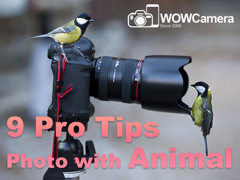 9 Pro Tips for Pet Photo